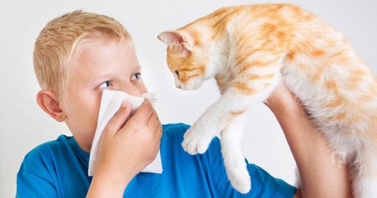Kedilere alerjiler: semptomlar ve tedavi